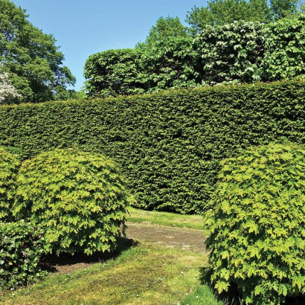 Commercial an Residential Hedge Trimming