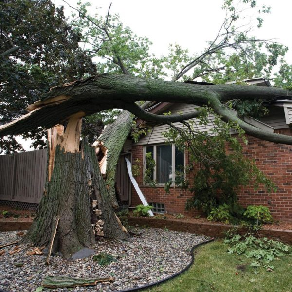 Emergency Storm & Tree Removal Services