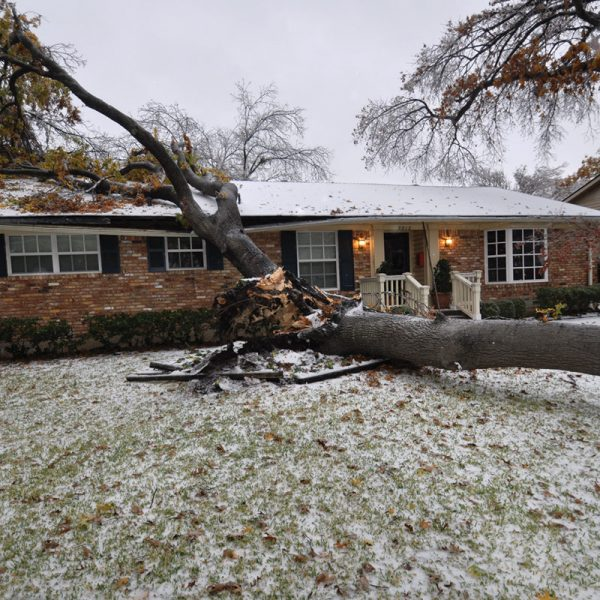 Monteregie tree removal services