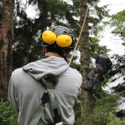 Sécurité pour l'enlèvement des arbres