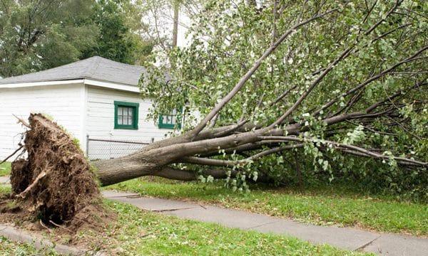 Prévention de chute d'arbres et l'enlèvement d'arbres