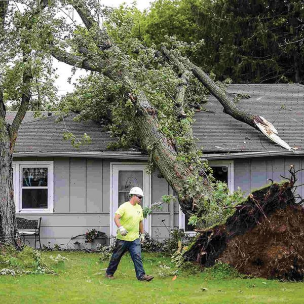 Removal of Damaged Trees Service