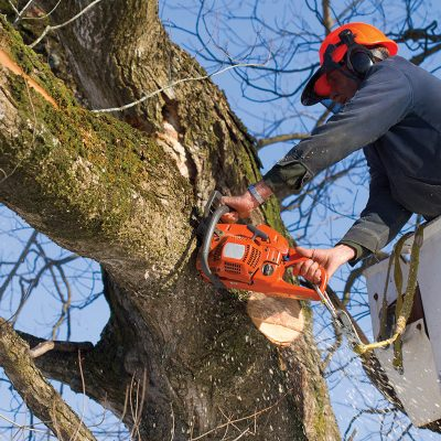 Service d'abattage d'arbres dans la region du Canton de L'est