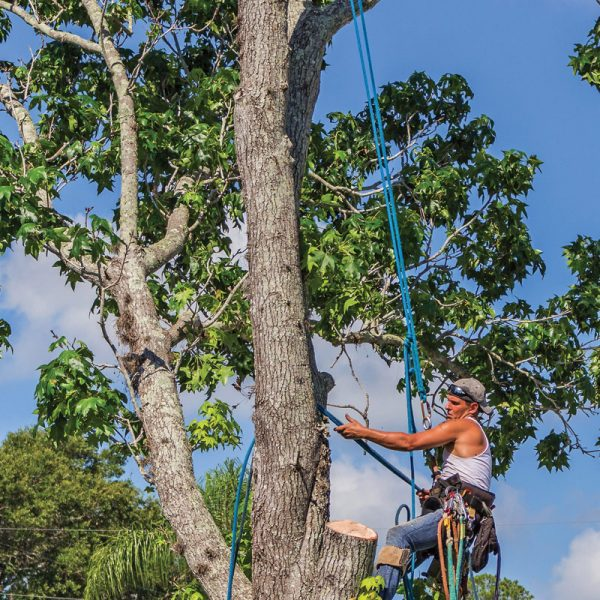 Monteregie Tree Pruning
