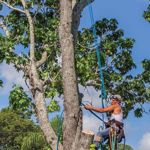 Monteregie Tree Pruning