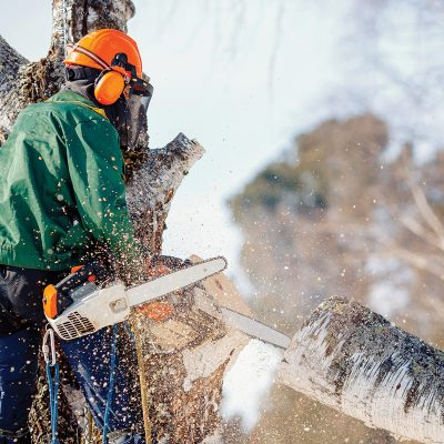 Tree Service Removal Vieux Longueuil, Longueuil QC
