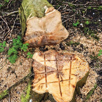 enlèvement de souches d'arbres