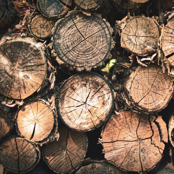 Entreprise en coupe d'arbre