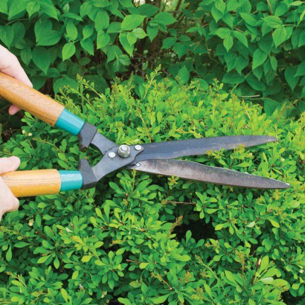 service-elagage-arbres